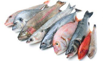 Promocionar el consumo de pescado es equivalente a promocionar salud